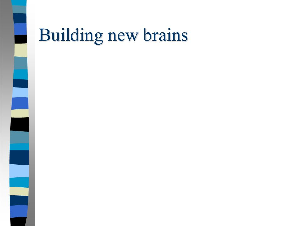 Building new brains