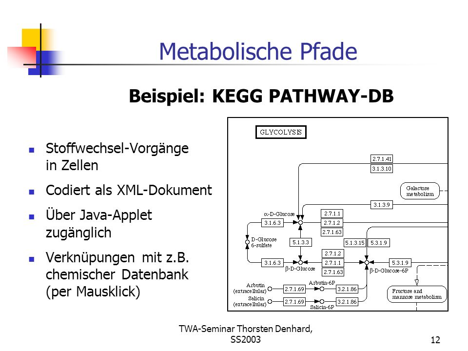 TWA-Seminar Thorsten Denhard, SS200312 Metabolische Pfade Stoffwechsel-Vorgänge in Zellen Codiert als XML-Dokument Über Java-Applet zugänglich Verknüp