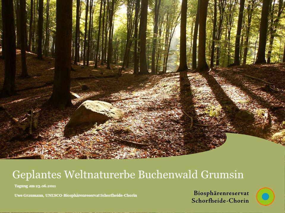 Tagung am 23.06.2011 Uwe Graumann, UNESCO-Biosphärenreservat Schorfheide-Chorin Geplantes Weltnaturerbe Buchenwald Grumsin