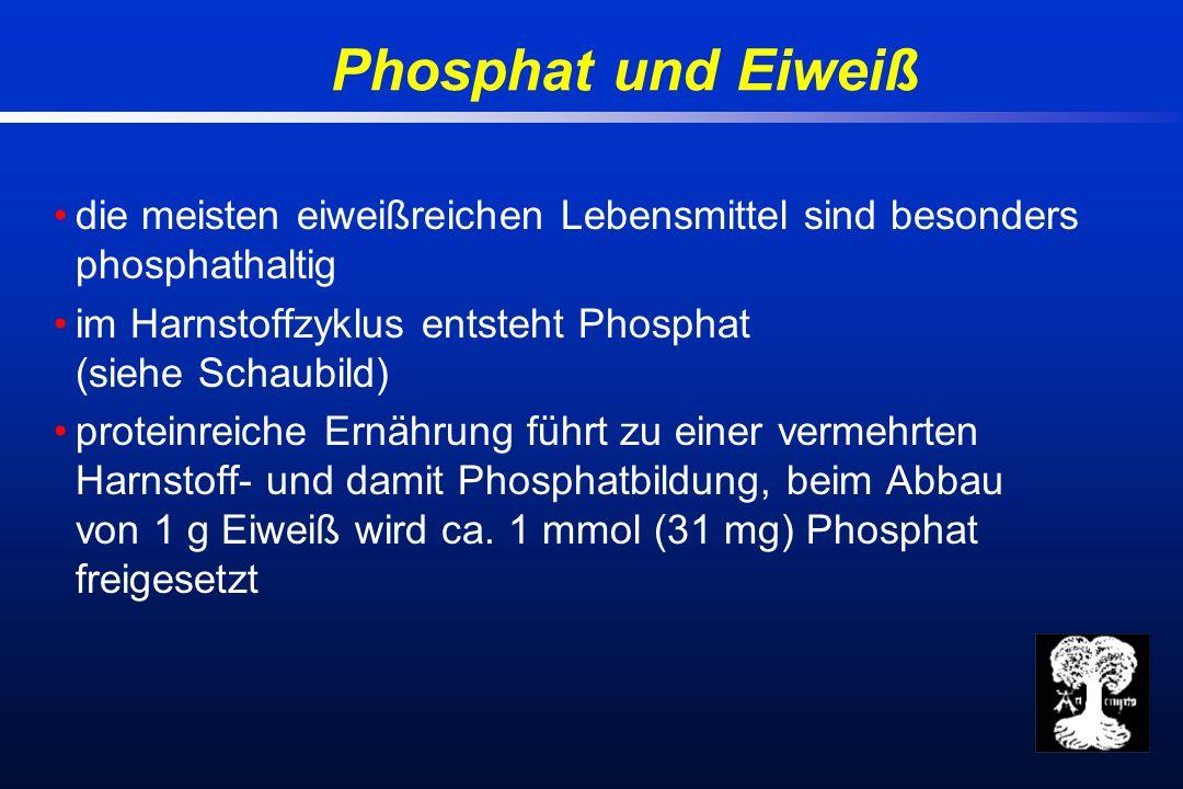 Phosphat und Eiweiß die meisten eiweißreichen Lebensmittel sind besonders phosphathaltig im Harnstoffzyklus entsteht Phosphat (siehe Schaubild) proteinreiche Ernährung führt zu einer vermehrten Harnstoff- und damit Phosphatbildung, beim Abbau von 1 g Eiweiß wird ca.