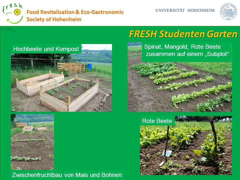 FRESH Studenten Garten Food Revitalisation & Eco-Gastronomic Society of Hohenheim Rote Beete Zwischenfruchtbau von Mais und Bohnen Hochbeete und Kompo