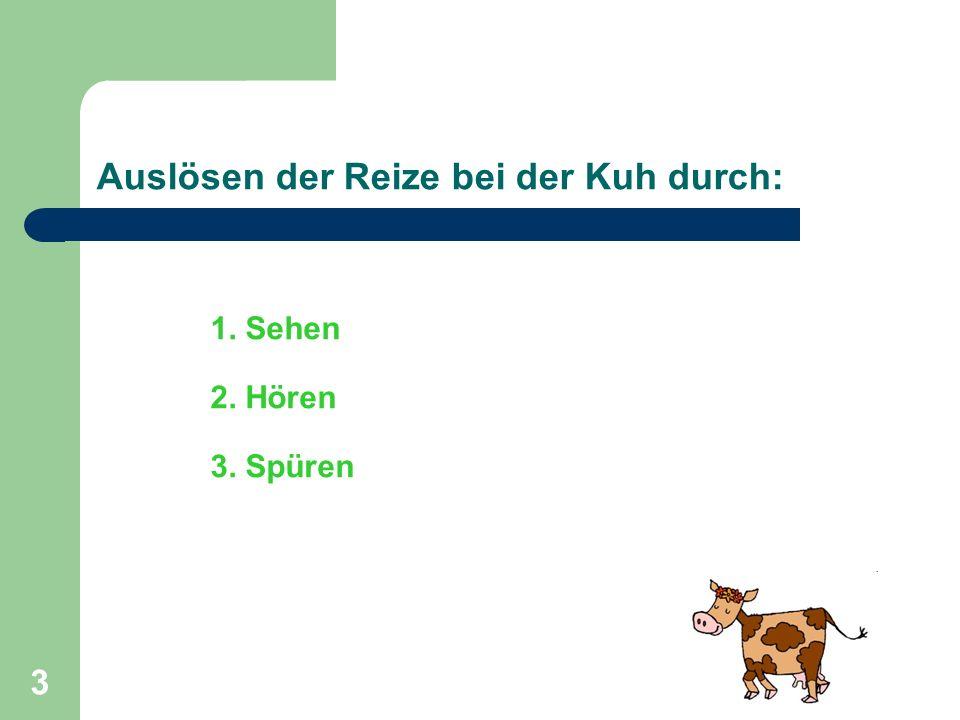 3 1. Sehen 2. Hören 3. Spüren Auslösen der Reize bei der Kuh durch: