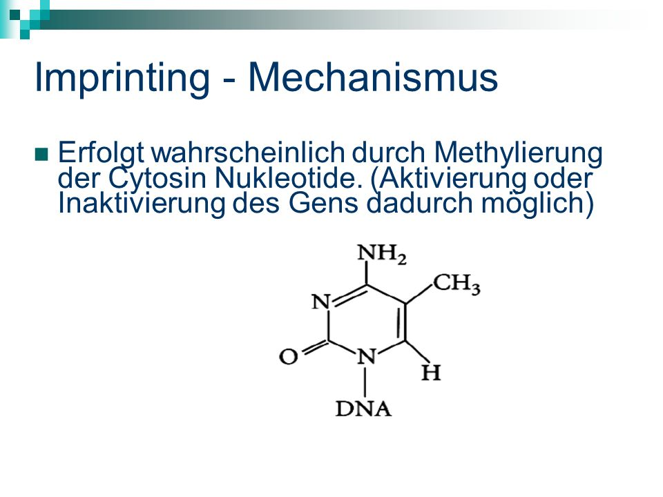 Imprinting - Mechanismus Erfolgt wahrscheinlich durch Methylierung der Cytosin Nukleotide.