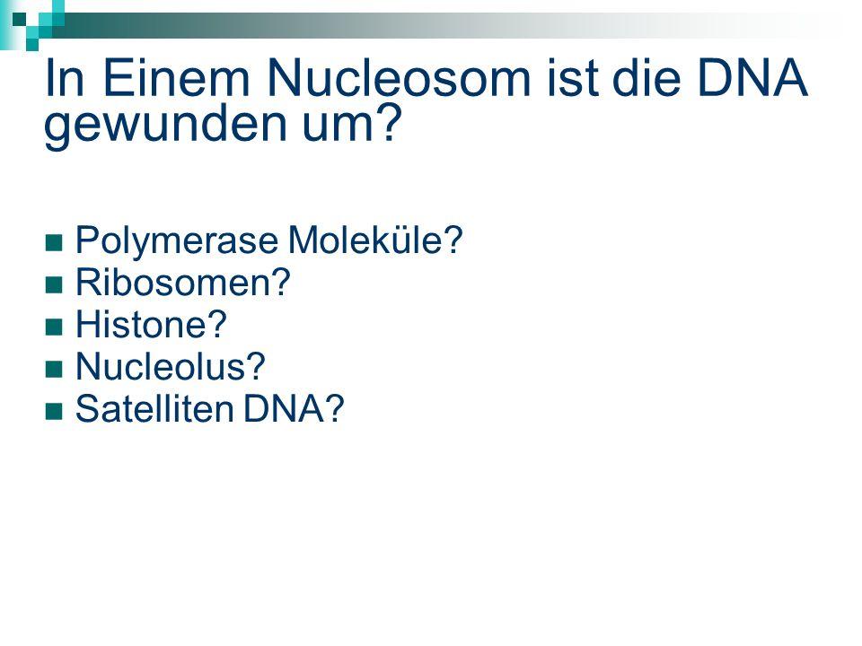 In Einem Nucleosom ist die DNA gewunden um.Polymerase Moleküle.