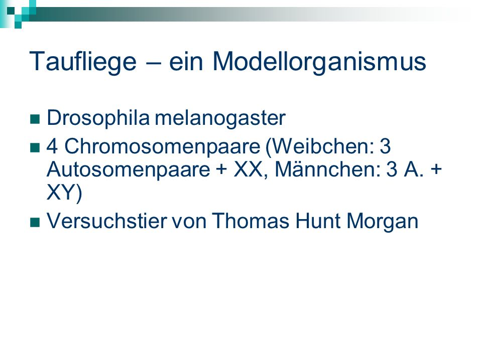 Taufliege – ein Modellorganismus Drosophila melanogaster 4 Chromosomenpaare (Weibchen: 3 Autosomenpaare + XX, Männchen: 3 A.