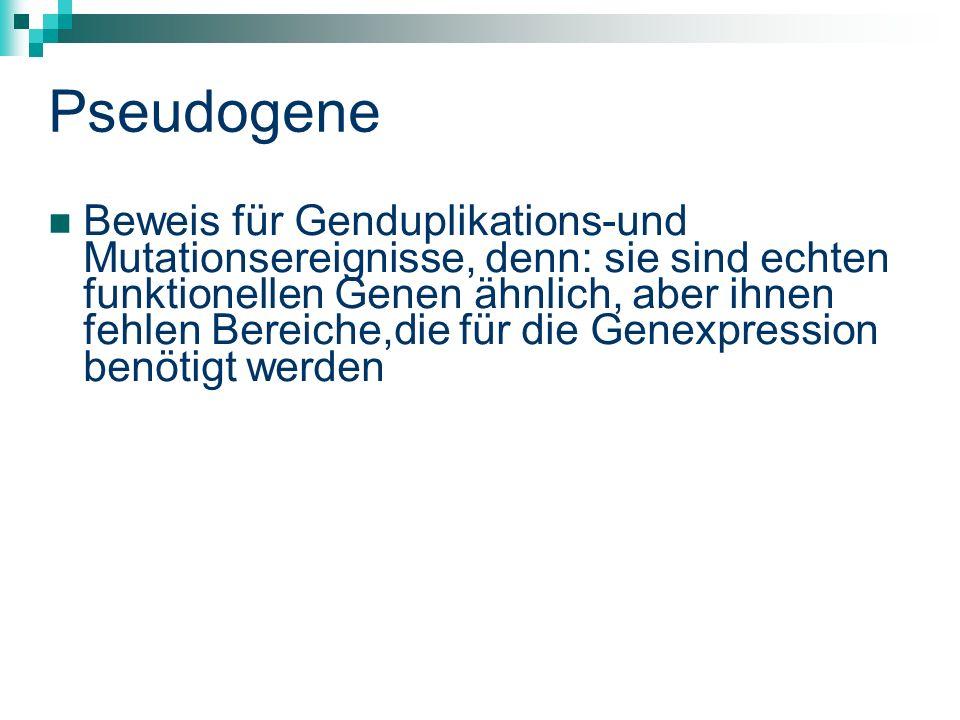 Pseudogene Beweis für Genduplikations-und Mutationsereignisse, denn: sie sind echten funktionellen Genen ähnlich, aber ihnen fehlen Bereiche,die für die Genexpression benötigt werden