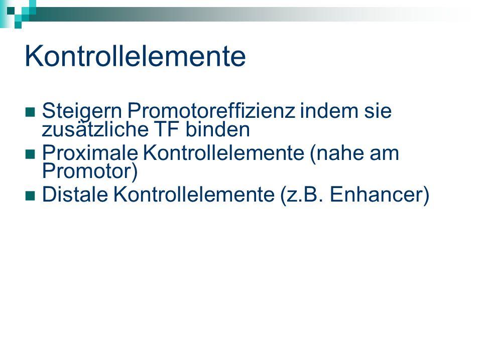 Kontrollelemente Steigern Promotoreffizienz indem sie zusätzliche TF binden Proximale Kontrollelemente (nahe am Promotor) Distale Kontrollelemente (z.B.