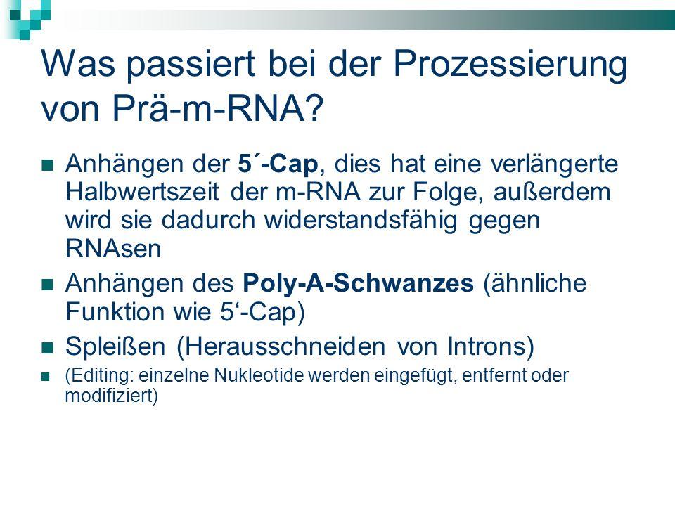 Was passiert bei der Prozessierung von Prä-m-RNA? Anhängen der 5´-Cap, dies hat eine verlängerte Halbwertszeit der m-RNA zur Folge, außerdem wird sie
