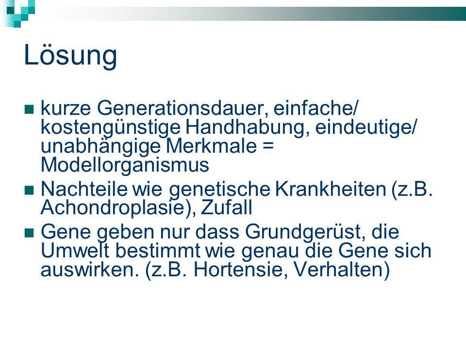 Lösung kurze Generationsdauer, einfache/ kostengünstige Handhabung, eindeutige/ unabhängige Merkmale = Modellorganismus Nachteile wie genetische Krankheiten (z.B.