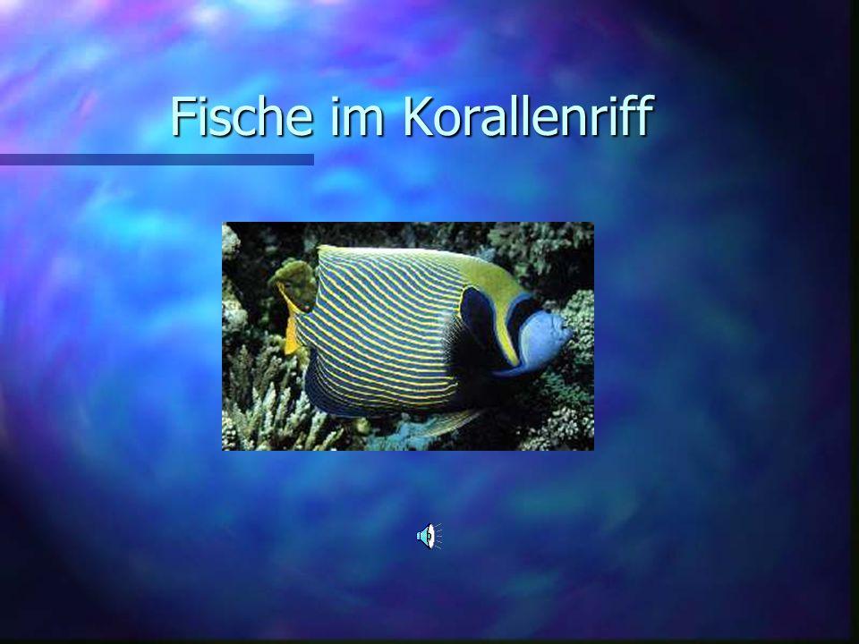 Fische im Korallenriff Fische im Korallenriff