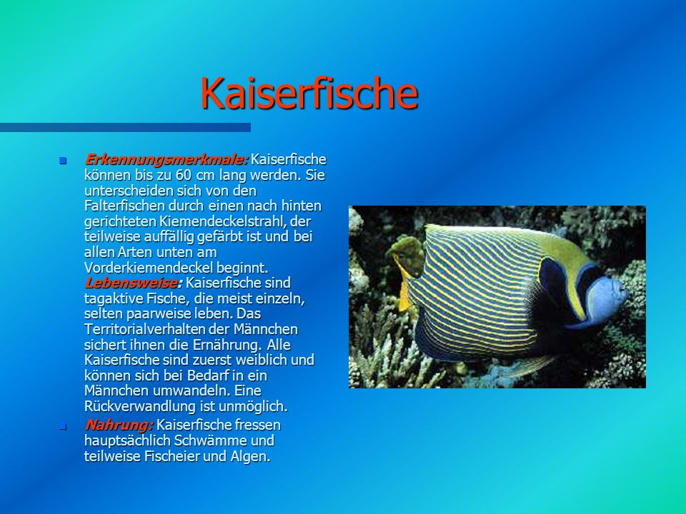 Kaiserfische n Erkennungsmerkmale: Kaiserfische können bis zu 60 cm lang werden.
