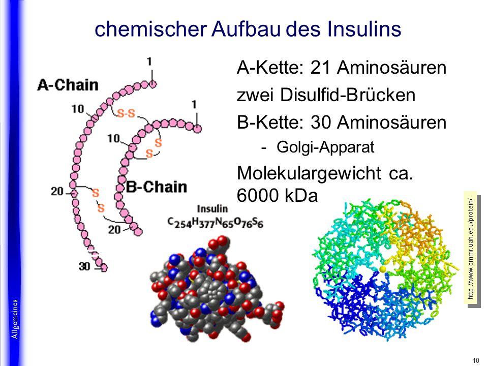 10 A-Kette: 21 Aminosäuren zwei Disulfid-Brücken B-Kette: 30 Aminosäuren -Golgi-Apparat Molekulargewicht ca. 6000 kDa chemischer Aufbau des Insulins A