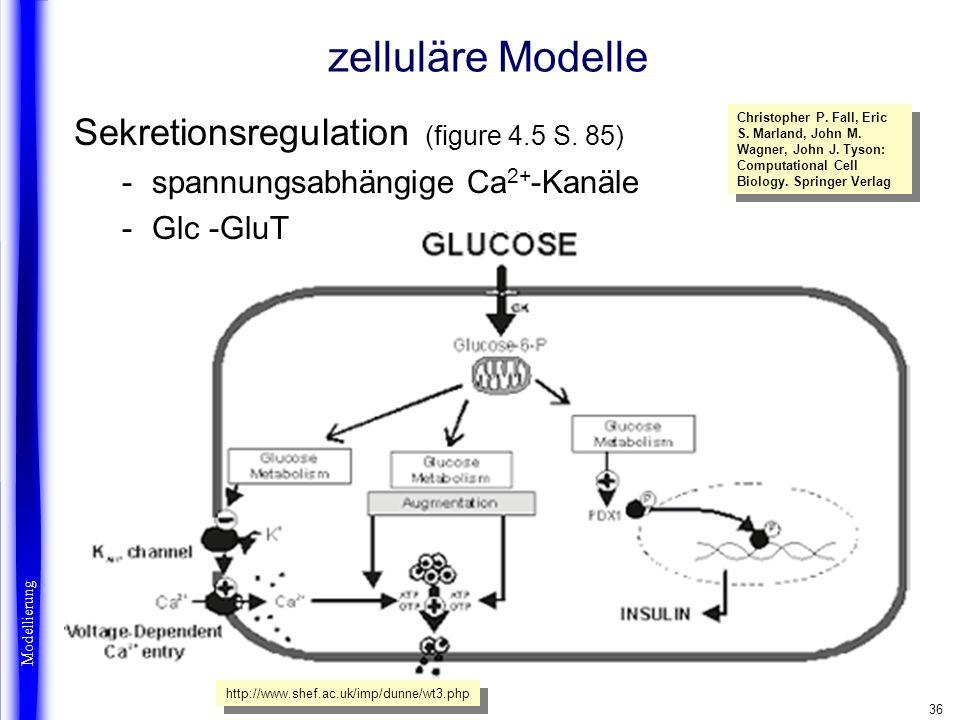 36 zelluläre Modelle Sekretionsregulation (figure 4.5 S. 85) -spannungsabhängige Ca 2+ -Kanäle -Glc -GluT Modellierung http://www.shef.ac.uk/imp/dunne