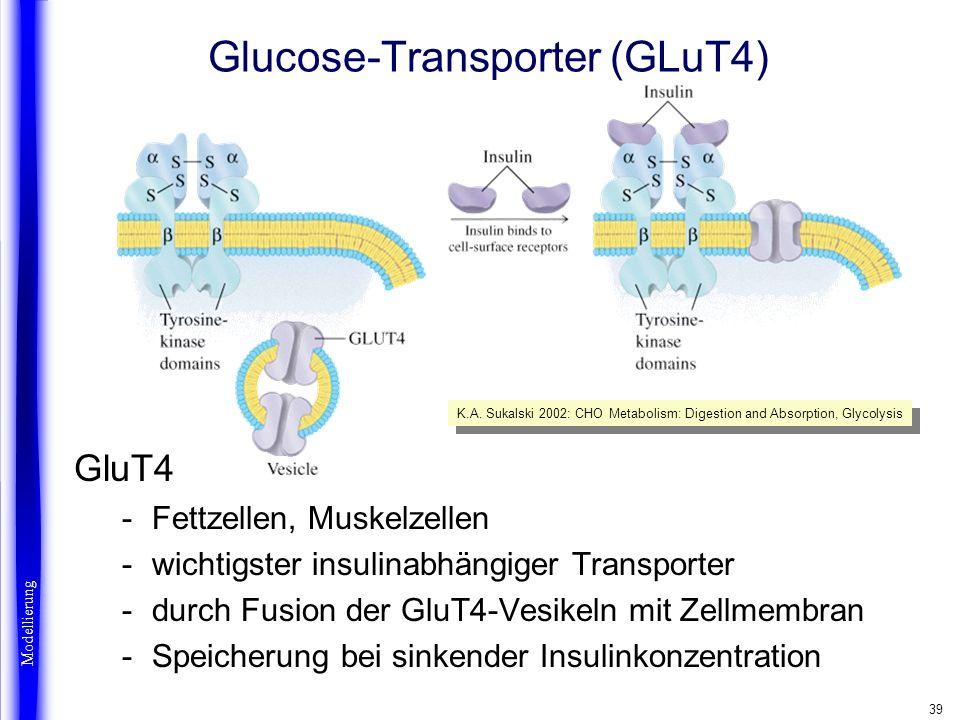 39 GluT4 -Fettzellen, Muskelzellen -wichtigster insulinabhängiger Transporter -durch Fusion der GluT4-Vesikeln mit Zellmembran -Speicherung bei sinken