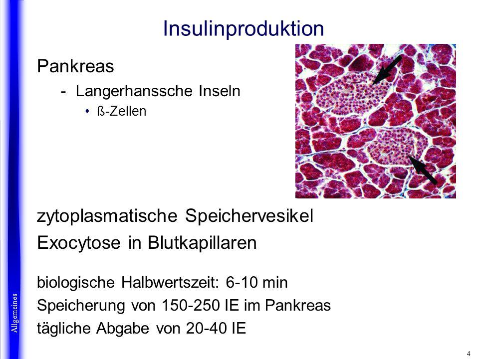 4 Insulinproduktion Pankreas -Langerhanssche Inseln ß-Zellen zytoplasmatische Speichervesikel Exocytose in Blutkapillaren biologische Halbwertszeit: 6
