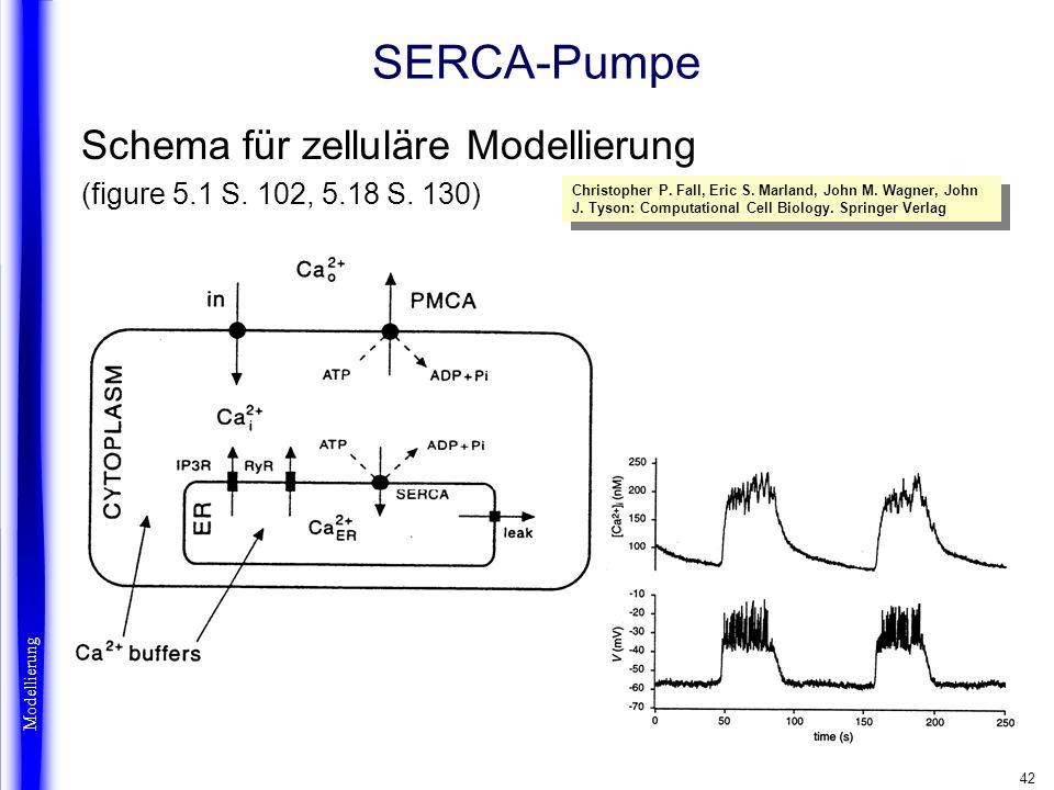 42 SERCA-Pumpe Schema für zelluläre Modellierung (figure 5.1 S. 102, 5.18 S. 130) Modellierung Christopher P. Fall, Eric S. Marland, John M. Wagner, J
