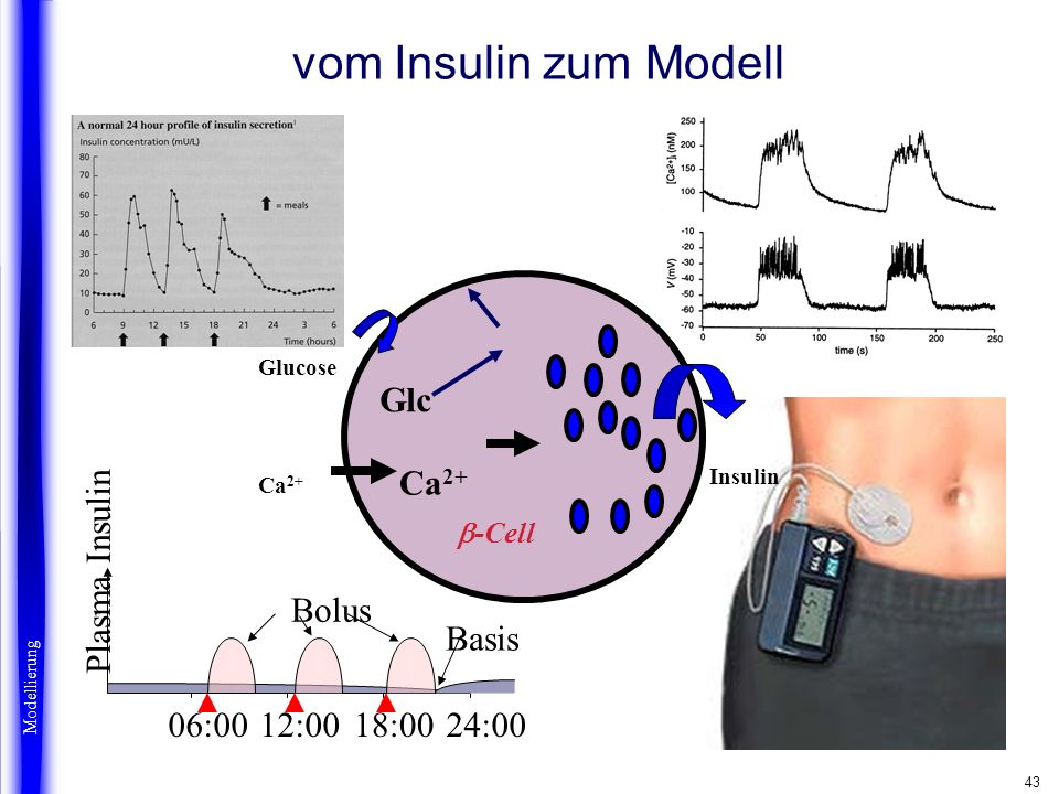43 vom Insulin zum Modell Glucose Beta cells Glc Ca 2+ Insulin -Cell 12:0006:0018:0024:00 Bolus Basis Plasma Insulin Modellierung