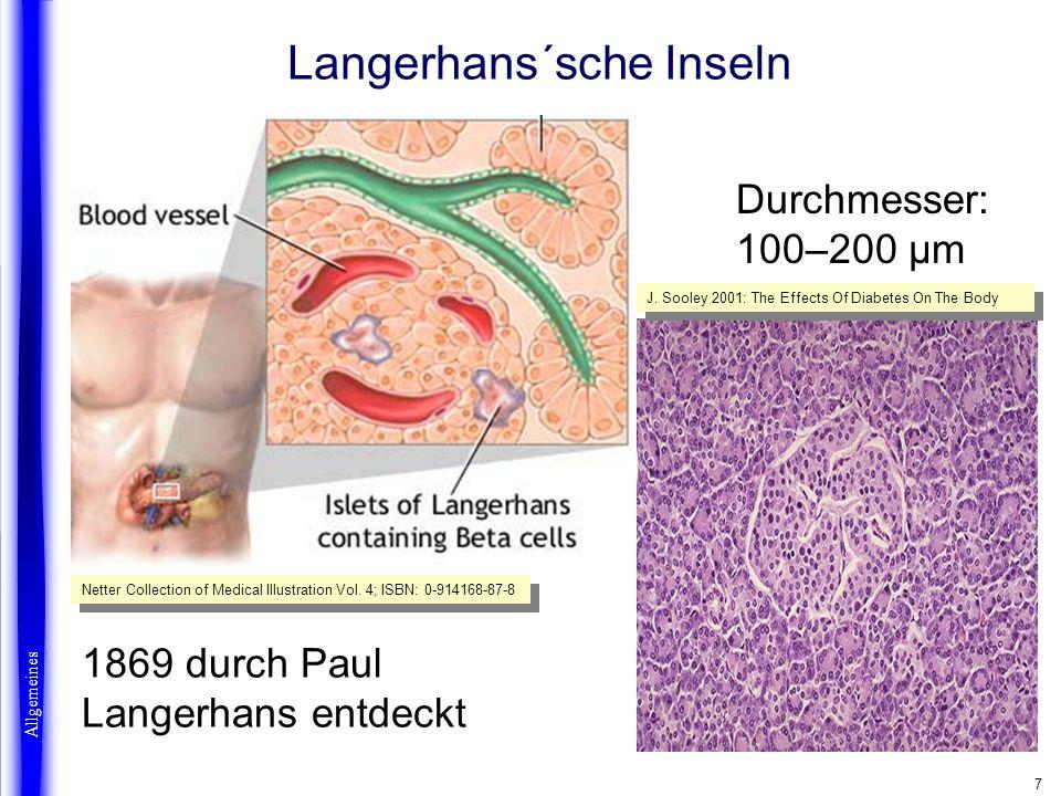 8 Langerhans´sche Inselzellen Allgemeines Roche Lexikon Medizin 4.
