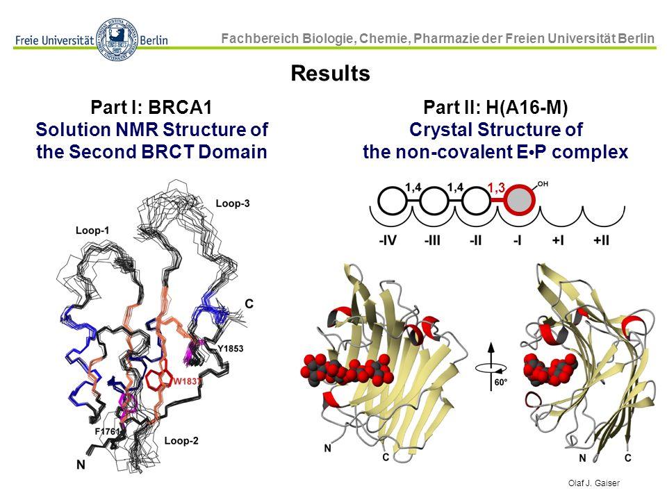 Fachbereich Biologie, Chemie, Pharmazie der Freien Universität Berlin Olaf J. Gaiser Part II: H(A16-M) Crystal Structure of the non-covalent E P compl