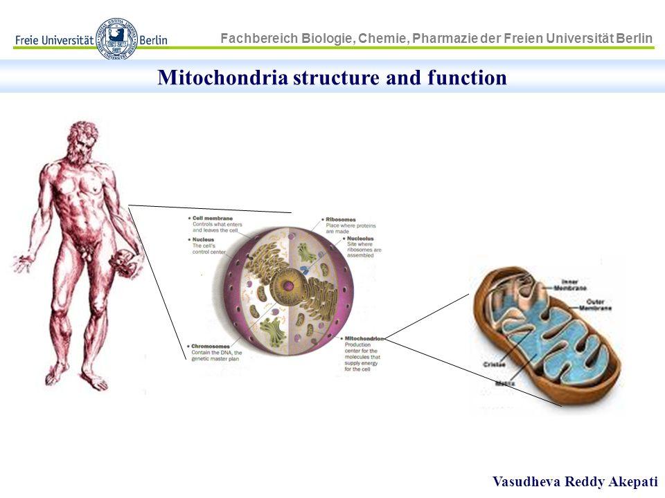 Fachbereich Biologie, Chemie, Pharmazie der Freien Universität Berlin Mitochondria structure and function Vasudheva Reddy Akepati