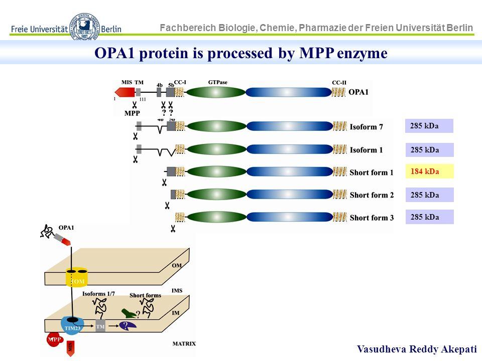 Fachbereich Biologie, Chemie, Pharmazie der Freien Universität Berlin OPA1 protein is processed by MPP enzyme Vasudheva Reddy Akepati 285 kDa 184 kDa
