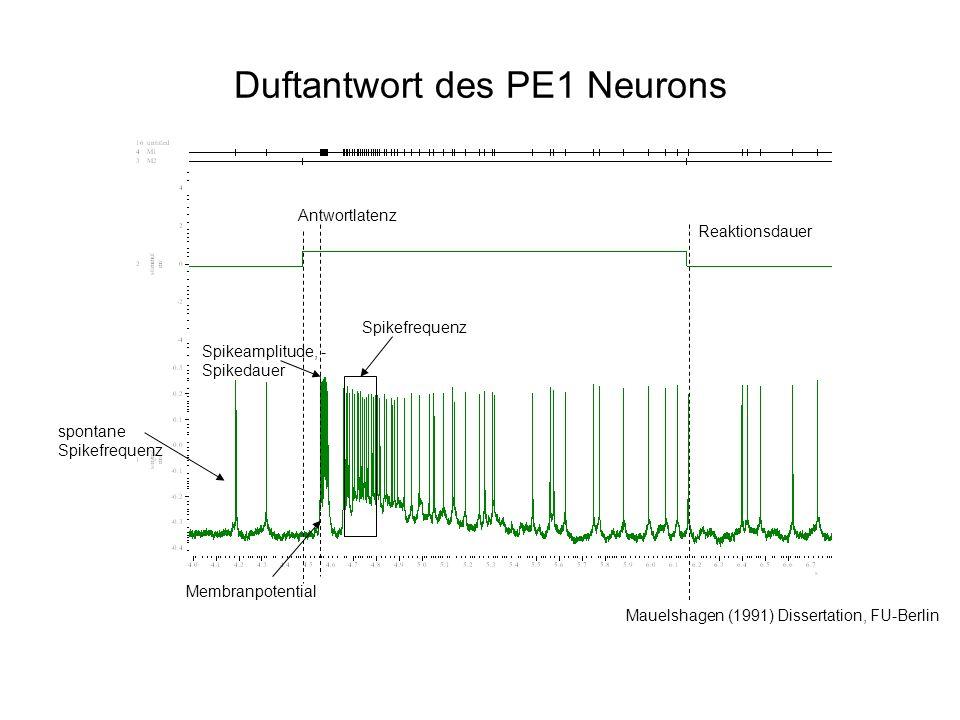 Duftantwort des PE1 Neurons Mauelshagen (1991) Dissertation, FU-Berlin Membranpotential Spikeamplitude, - Spikedauer Spikefrequenz Antwortlatenz spontane Spikefrequenz Reaktionsdauer