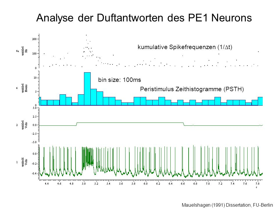 Analyse der Duftantworten des PE1 Neurons Mauelshagen (1991) Dissertation, FU-Berlin bin size: 100ms Peristimulus Zeithistogramme (PSTH) kumulative Spikefrequenzen (1/ t)