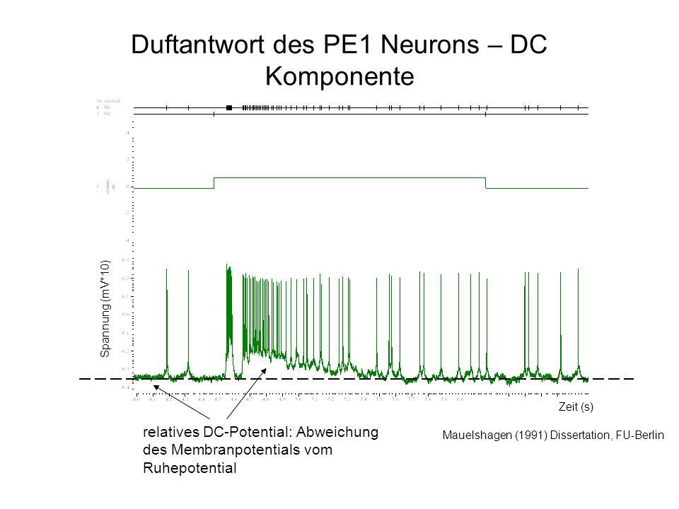 Duftantwort des PE1 Neurons – DC Komponente Mauelshagen (1991) Dissertation, FU-Berlin relatives DC-Potential: Abweichung des Membranpotentials vom Ruhepotential Spannung (mV*10) Zeit (s)