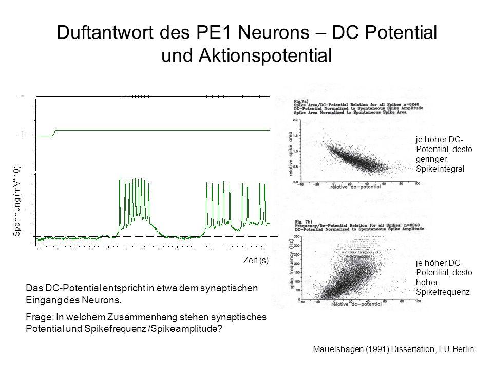 Duftantwort des PE1 Neurons – DC Potential und Aktionspotential Mauelshagen (1991) Dissertation, FU-Berlin je höher DC- Potential, desto geringer Spikeintegral Das DC-Potential entspricht in etwa dem synaptischen Eingang des Neurons.