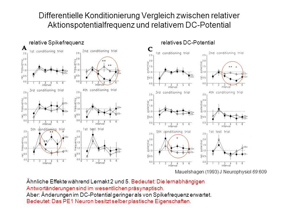 Differentielle Konditionierung Vergleich zwischen relativer Aktionspotentialfrequenz und relativem DC-Potential Ähnliche Effekte während Lernakt 2 und 5.