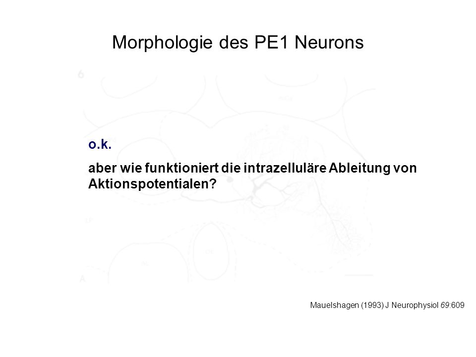 Morphologie des PE1 Neurons Mauelshagen (1993) J Neurophysiol 69:609 o.k. aber wie funktioniert die intrazelluläre Ableitung von Aktionspotentialen?