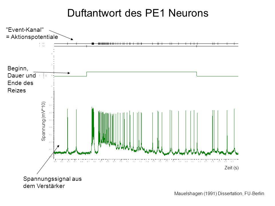 Duftantwort des PE1 Neurons Mauelshagen (1991) Dissertation, FU-Berlin Spannung (mV*10) Zeit (s) Spannungssignal aus dem Verstärker Beginn, Dauer und Ende des Reizes Event-Kanal = Aktionspotentiale
