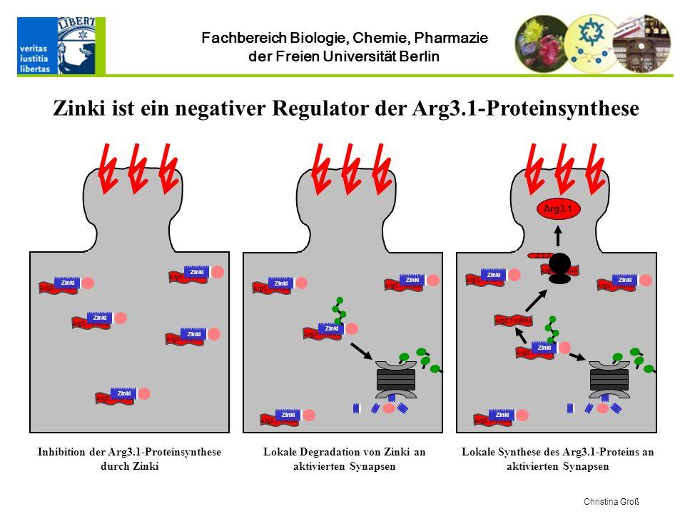 Fachbereich Biologie, Chemie, Pharmazie der Freien Universität Berlin Christina Groß Zinki ist ein negativer Regulator der Arg3.1-Proteinsynthese Arg3.1-mRNA Zinki Arg3.1-mRNA Zinki Arg3.1-mRNA Zinki Arg3.1-mRNA Zinki Arg3.1-mRNA Zinki Arg3.1-mRNA Zinki Arg3.1 Arg3.1-mRNA Zinki Arg3.1-mRNA Zinki Arg3.1-mRNA Zinki Arg3.1-mRNA Zinki Arg3.1-mRNA Zinki Arg3.1-mRNA Zinki Arg3.1-mRNA Zinki Inhibition der Arg3.1-Proteinsynthese durch Zinki Lokale Degradation von Zinki an aktivierten Synapsen Lokale Synthese des Arg3.1-Proteins an aktivierten Synapsen