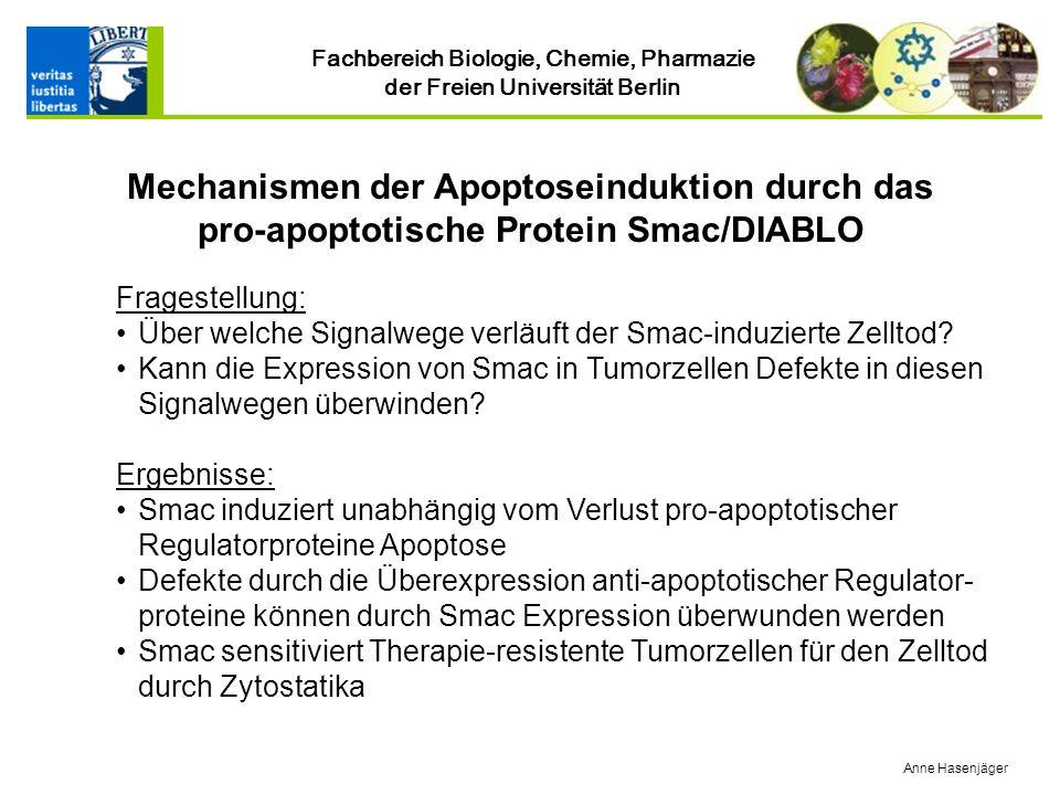 Fachbereich Biologie, Chemie, Pharmazie der Freien Universität Berlin Fragestellung: Über welche Signalwege verläuft der Smac-induzierte Zelltod.