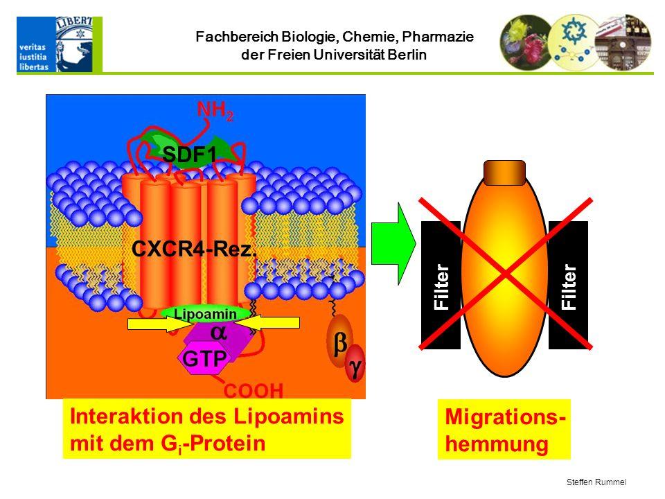 Fachbereich Biologie, Chemie, Pharmazie der Freien Universität Berlin Steffen Rummel Interaktion des Lipoamins mit dem G i -Protein SDF1 CXCR4-Rez.