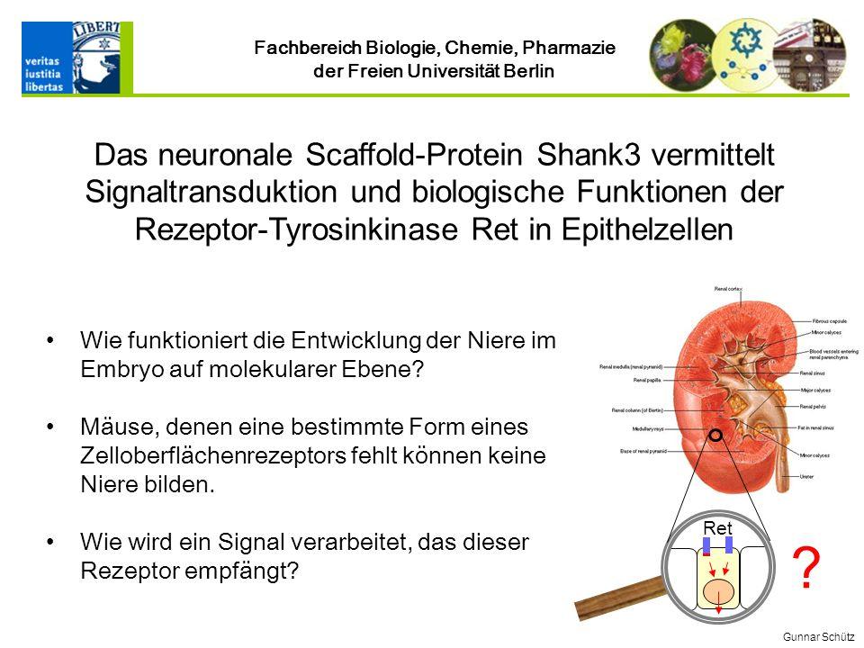 Fachbereich Biologie, Chemie, Pharmazie der Freien Universität Berlin Wie funktioniert die Entwicklung der Niere im Embryo auf molekularer Ebene.