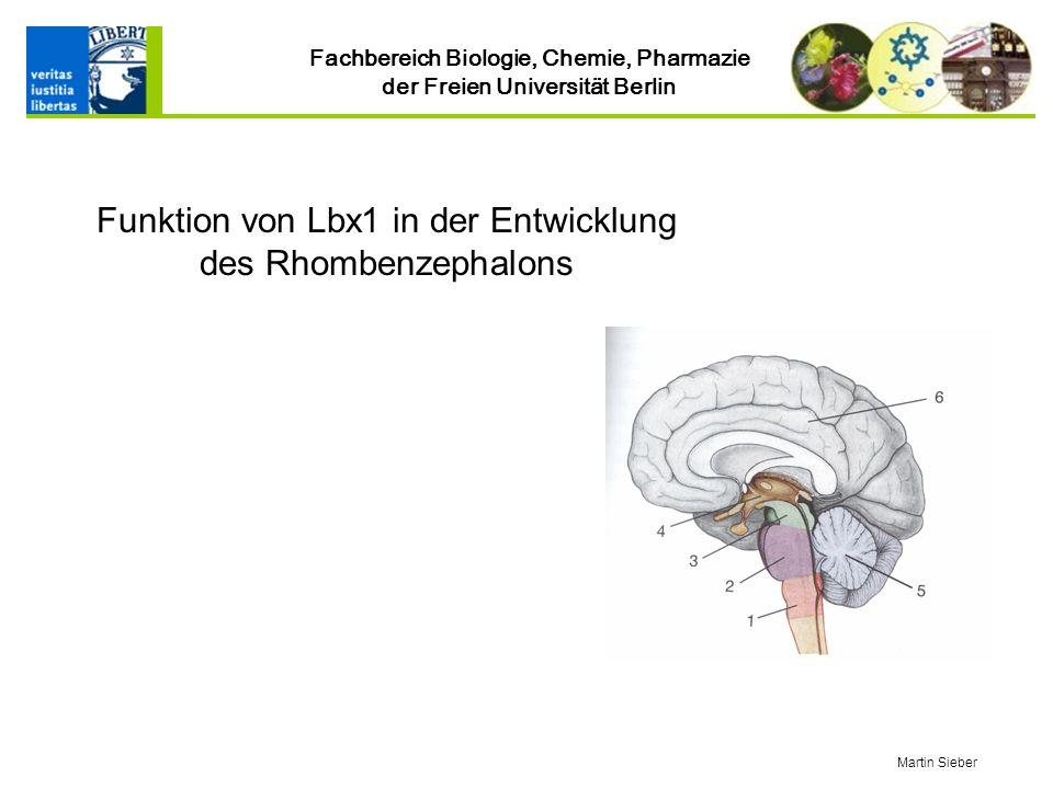 Fachbereich Biologie, Chemie, Pharmazie der Freien Universität Berlin Funktion von Lbx1 in der Entwicklung des Rhombenzephalons Martin Sieber