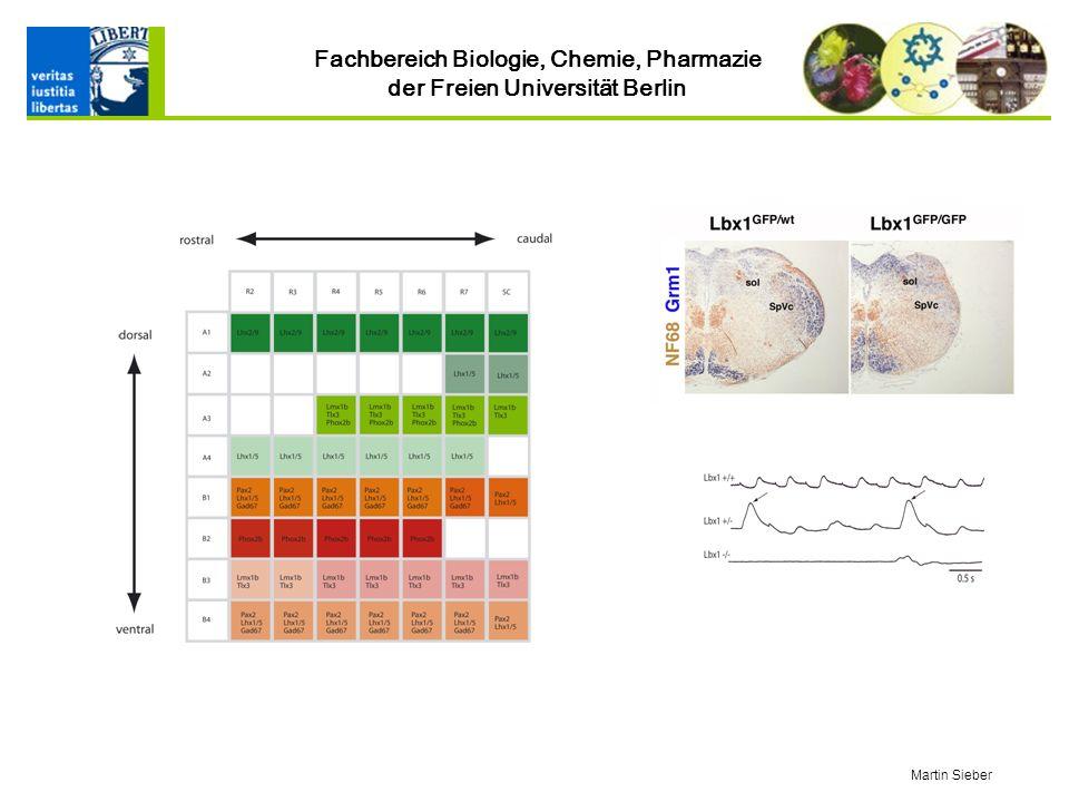 Fachbereich Biologie, Chemie, Pharmazie der Freien Universität Berlin Martin Sieber