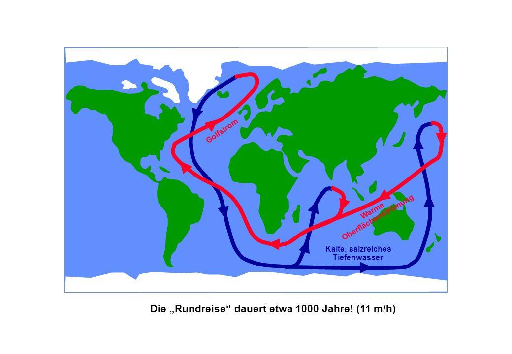 Kalte, salzreiches Tiefenwasser Warme Oberflächenströmung Golfstrom Die Rundreise dauert etwa 1000 Jahre! (11 m/h)