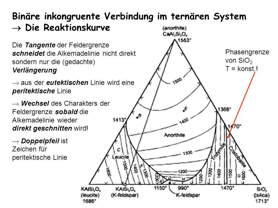 Binäre inkongruente Verbindung im ternären System Die Reaktionskurve Die Tangente der Feldergrenze schneidet die Alkemadelinie nicht direkt sondern nu