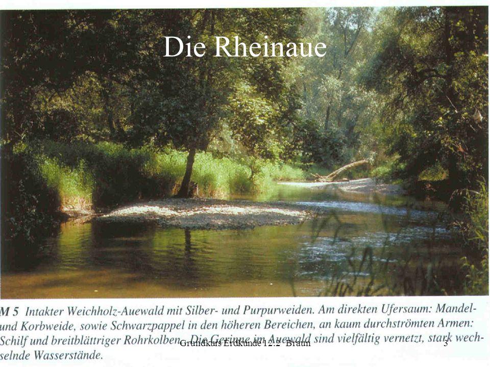 Grundkurs Erdkunde 12.2 Braun3 Die Rheinaue