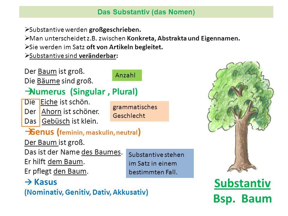 Substantiv Bsp. Baum Der Baum ist groß. Die Bäume sind groß. Numerus (Singular, Plural) Die Eiche ist schön. Der Ahorn ist schöner. Das Gebüsch ist kl