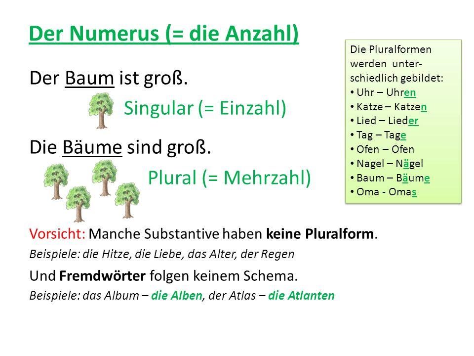 Der Numerus (= die Anzahl) Der Baum ist groß. Singular (= Einzahl) Die Bäume sind groß. Plural (= Mehrzahl) Vorsicht: Manche Substantive haben keine P