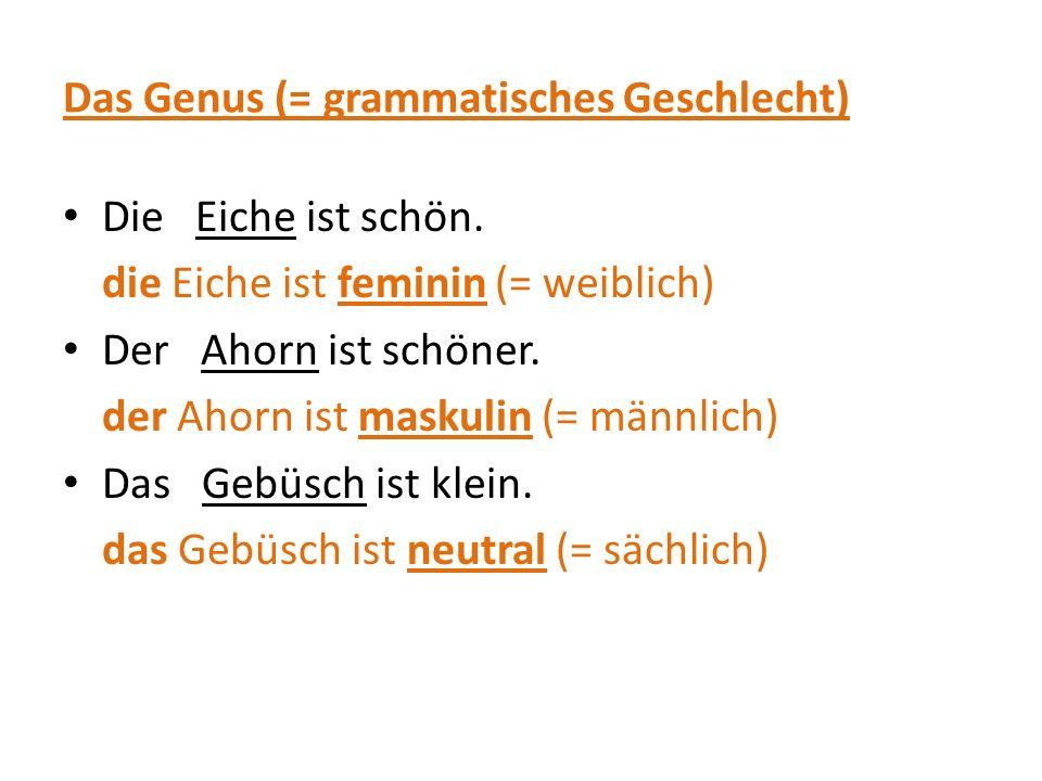 Das Genus (= grammatisches Geschlecht) Die Eiche ist schön. die Eiche ist feminin (= weiblich) Der Ahorn ist schöner. der Ahorn ist maskulin (= männli