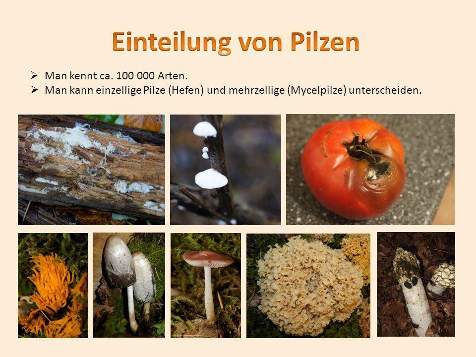 Wie können systematisch Pilze eingeteilt werden.