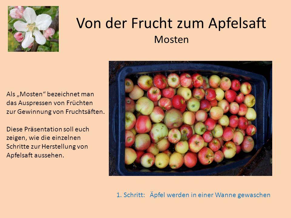 Die gewaschenen Äpfel werden in einen Muser geworfen.