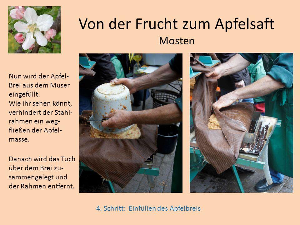 Von der Frucht zum Apfelsaft Mosten Nun wird der Apfel- Brei aus dem Muser eingefüllt. Wie ihr sehen könnt, verhindert der Stahl- rahmen ein weg- flie