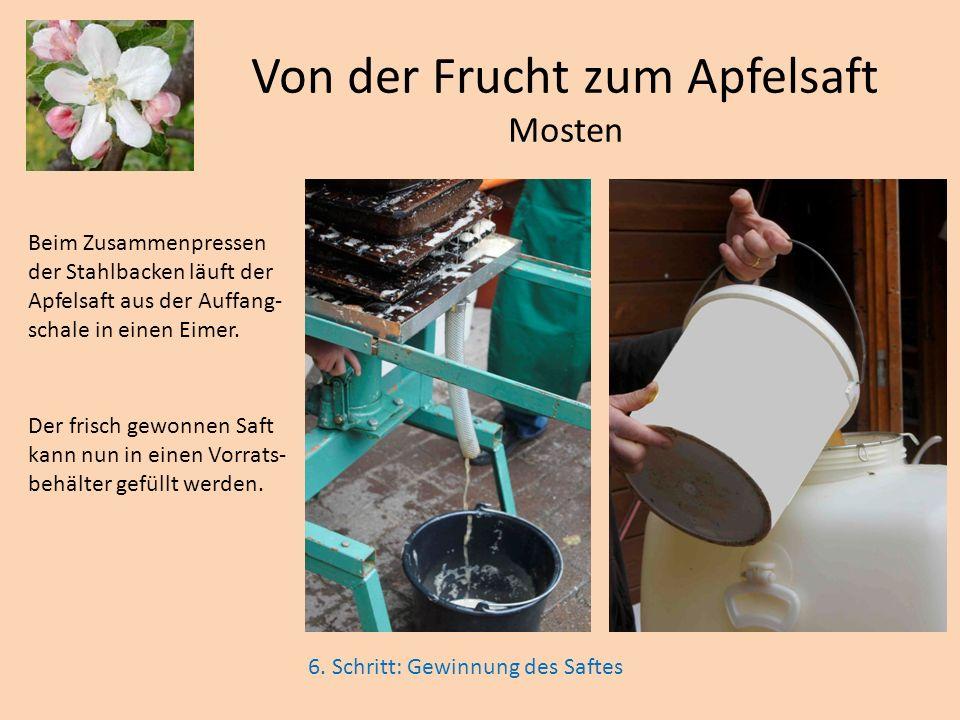 Von der Frucht zum Apfelsaft Mosten 6. Schritt: Gewinnung des Saftes Beim Zusammenpressen der Stahlbacken läuft der Apfelsaft aus der Auffang- schale