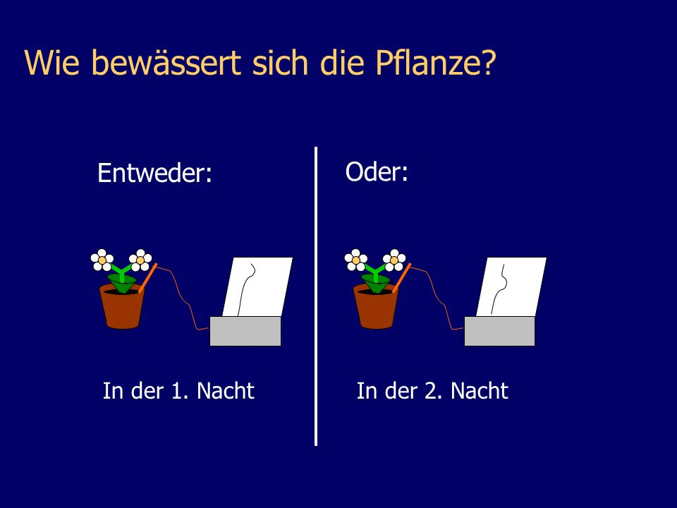 Wie bewässert sich die Pflanze In der 1. NachtIn der 2. Nacht Entweder: Oder: