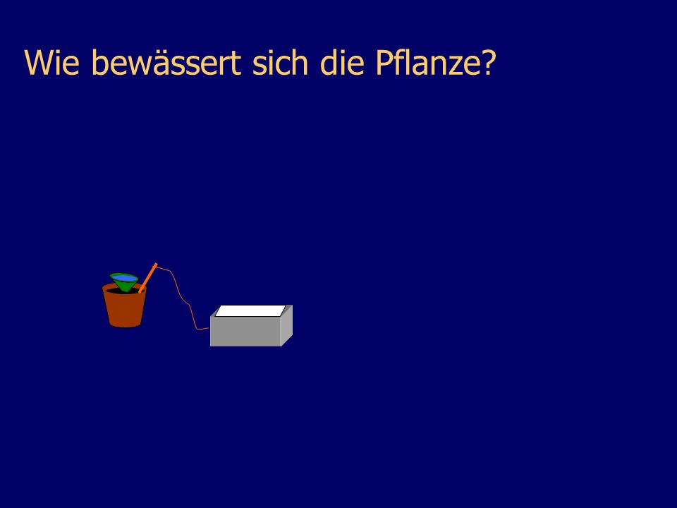 Wie bewässert sich die Pflanze